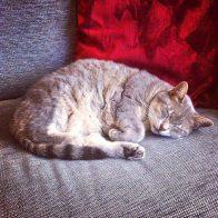 Bella-on-the-Sofa