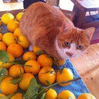 Spassy-and-Oranges
