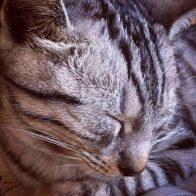 Sylvie-Sleeping