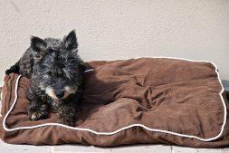 Tillie-on-her-Bed