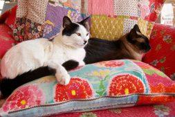 Millie & Missy