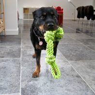 Mia with Rope Toy
