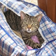 Tinky sitting in the bag